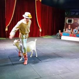 Философия циркового бытия