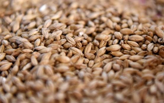 Урожай зерна в этом году будет примерно на 40% меньше прошлогоднего