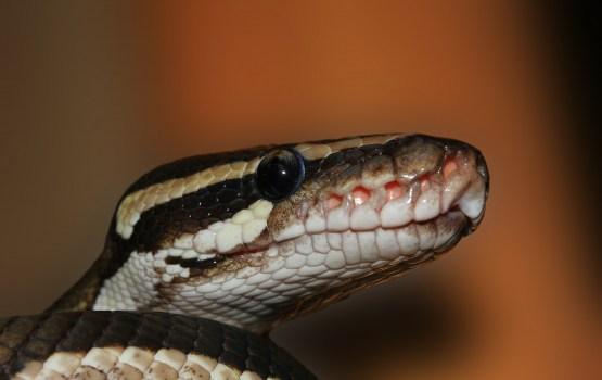 В Ругели змея заползла во двор