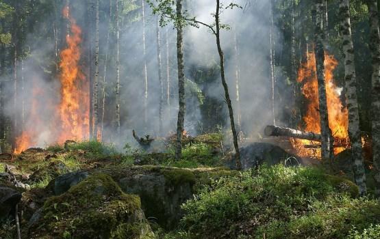 В Цесисе возник обширный лесной пожар