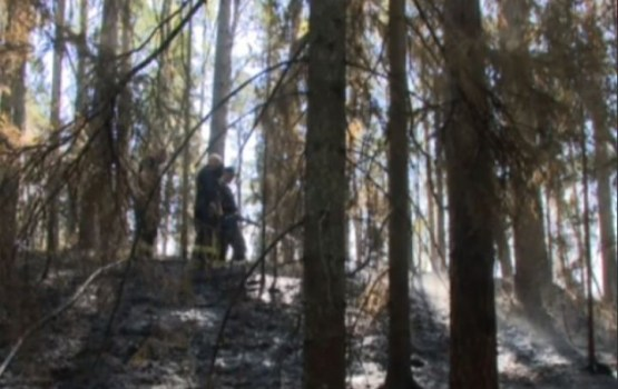 Лесной пожар в Цесисе потушить пока не удается