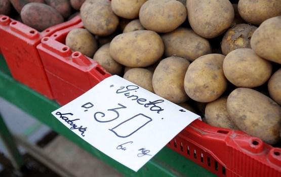 Уборка картофеля может продлиться до конца сентября