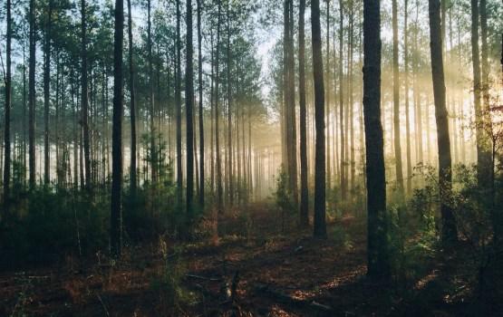 В Сочи спасатели вывели из леса заблудившуюся семью из Латвии