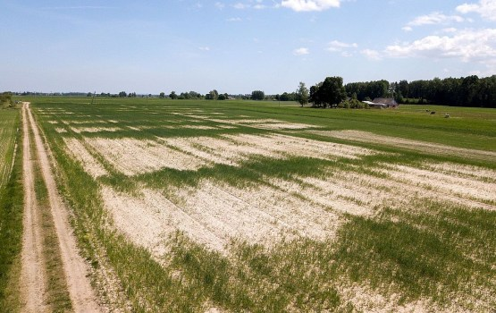 Cельскохозяйственные посевы можно будет страховать от засухи