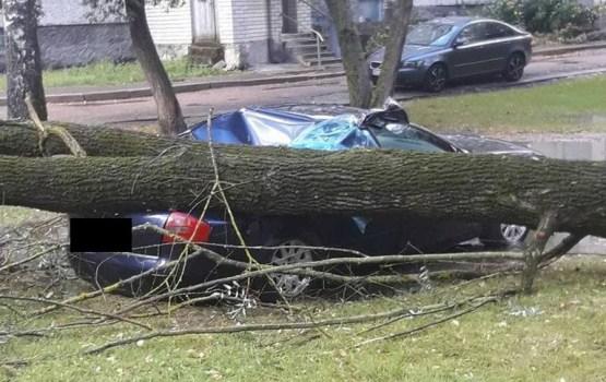 Не повезло: в Риге дерево упало на машину
