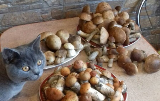 Объявлен победитель лучшего грибного урожая!