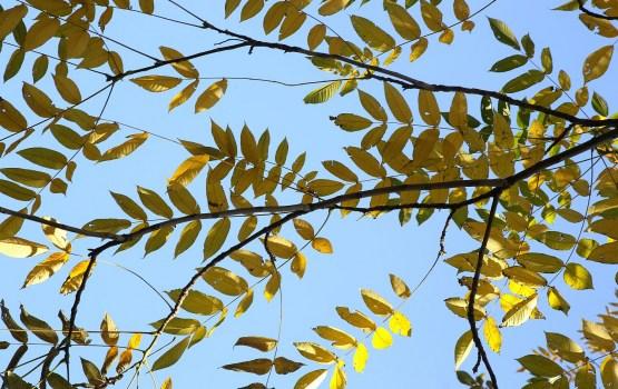 Температурный рекорд 18 октября побит на 12 метеостанциях