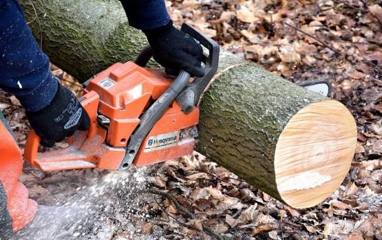Вырубка деревьев на улице Селияс под вопросом