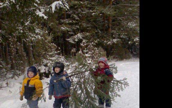 Где будут торговать новогодними елками
