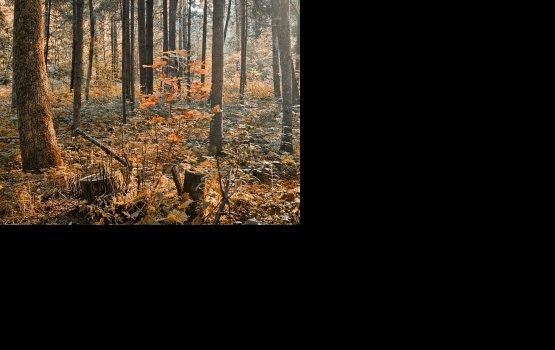 «Лешие» в лесу и на дорогах