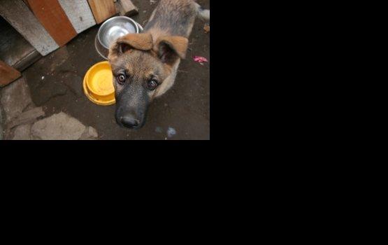 Собака искусала ребёнка, охраняя свою миску
