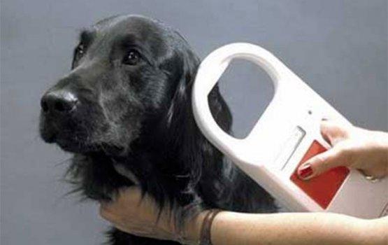 Чипирование собак: штрафы определили,  но как будут проверять – непонятно
