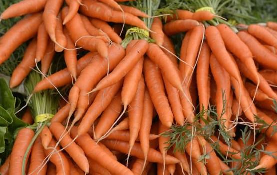 Берегись морковки: в латвийских овощах может быть кишечная палочка