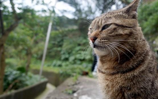 В Британии пропавший кот нашелся спустя 10 лет