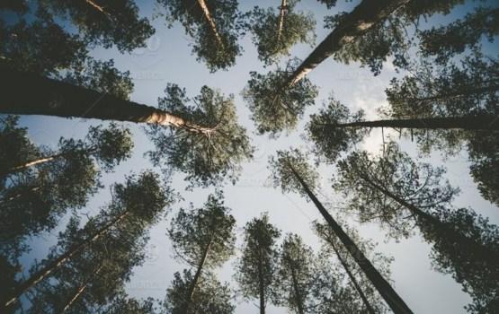 Есть свой лес – участвуй в конкурсе