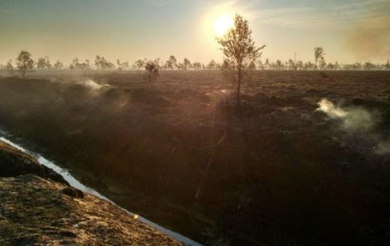 В районе Талси уже 14 часов горит торф и лес