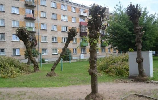 Читатель негодует: зачем «побрили» деревья во дворе?