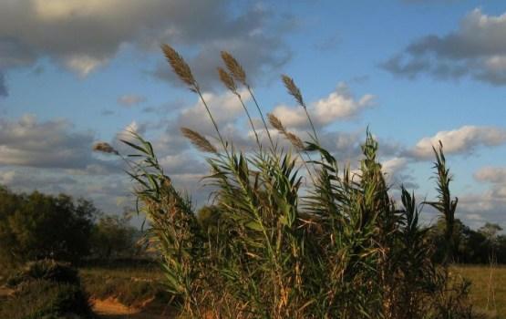 Синоптики предупреждают о сильном ветре и грозах