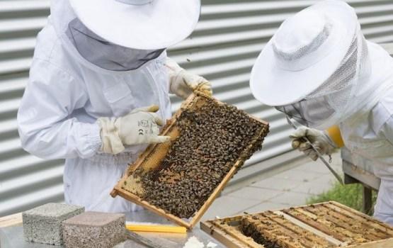 В Латвии создали первое в мире приложение с голосовым набором для пчеловодов