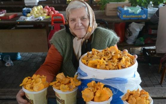 Конкурс грибников: голосуем за лучший грибной урожай!