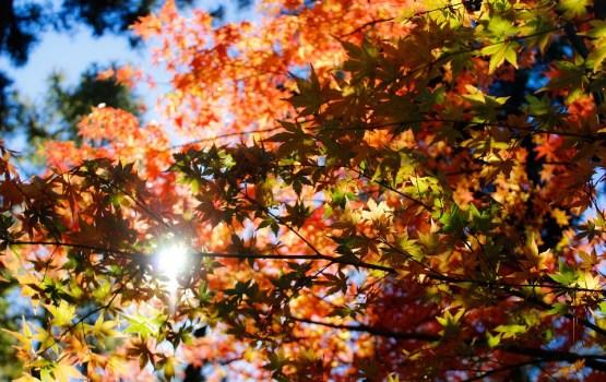В Латвии началась астрономическая осень