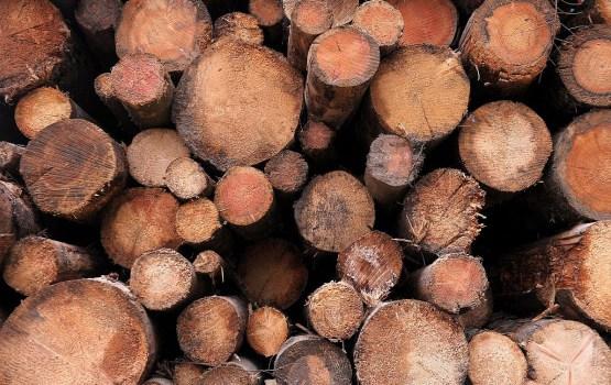 Экспорт продукции лесной отрасли за восемь месяцев вырос на 14,5%
