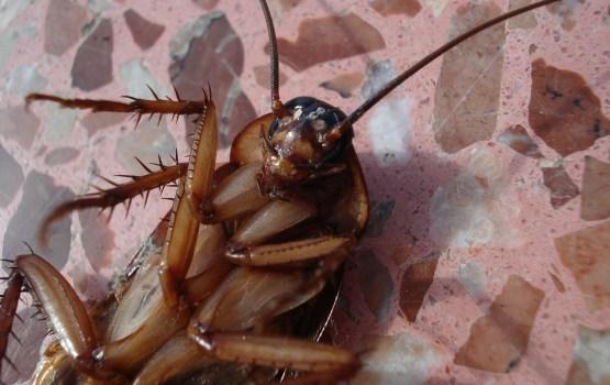 Из-за тараканов пришлось закрыть часть магазина Rimi в Елгаве