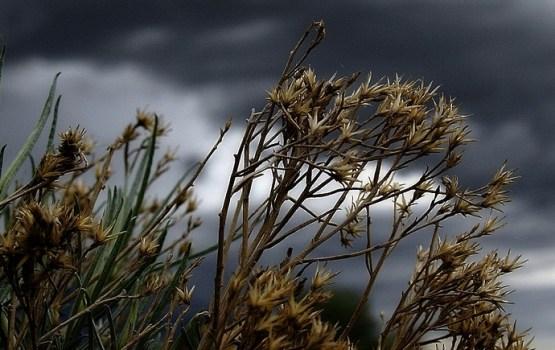 В воскресенье немного усилится ветер, пройдут дожди