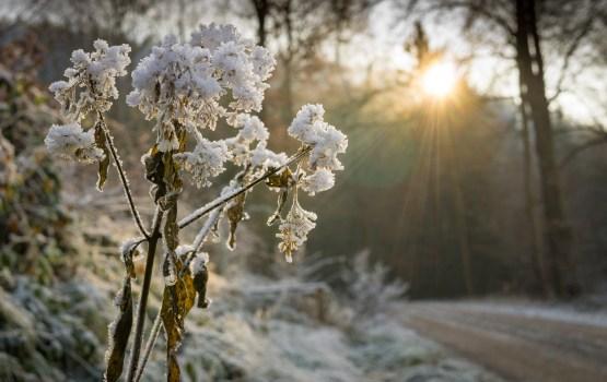 В понедельник в Даугавпилсе ожидается +3 градуса