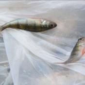 Свежий воздух и отличный улов