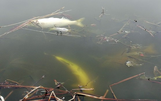 Сотрудники УКХ убирают заморенную рыбу