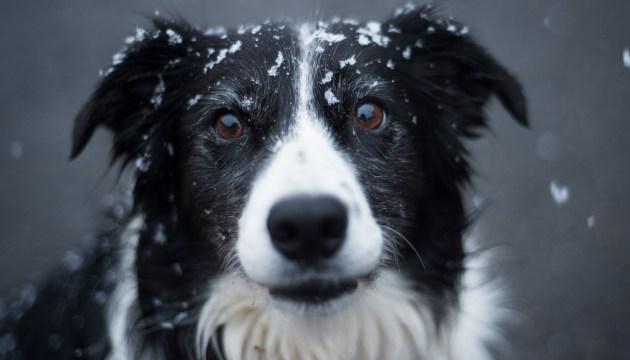 В четверг в Даугавпилсе ожидается снег