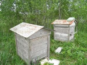 Пчелы не против меда, но против глифосата