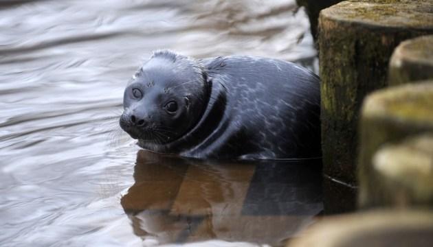 Смертельная инфекция в Рижском зоопарке унесла жизни шести спасенных весной тюленей