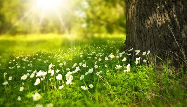 Синоптики прогнозируют солнечные и теплые выходные