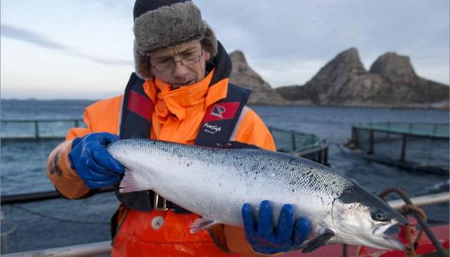 Норвежский лосось: семь раз отмерь, один отрежь