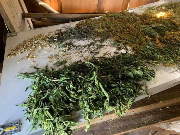 Полиция нашла теплицу с марихуаной