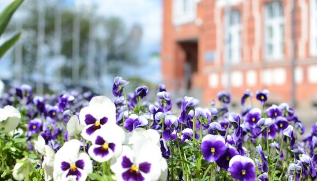 Даугавпилс в цветочном наряде: чем благоустроители порадуют нас в этом году?