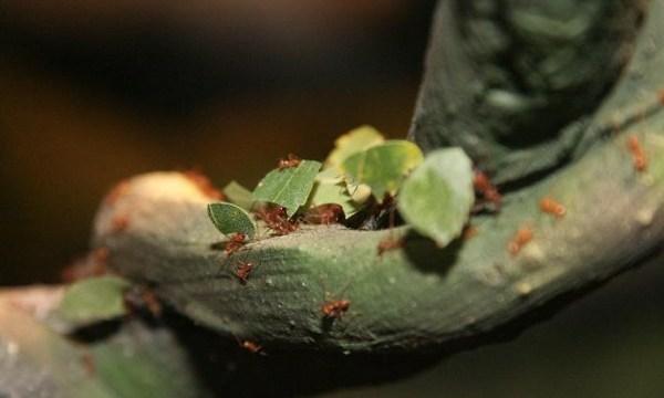 А вы знаете, чем зимой в Латгальском зоосаде кормят муравьев-листорезов? (ВИДЕО)