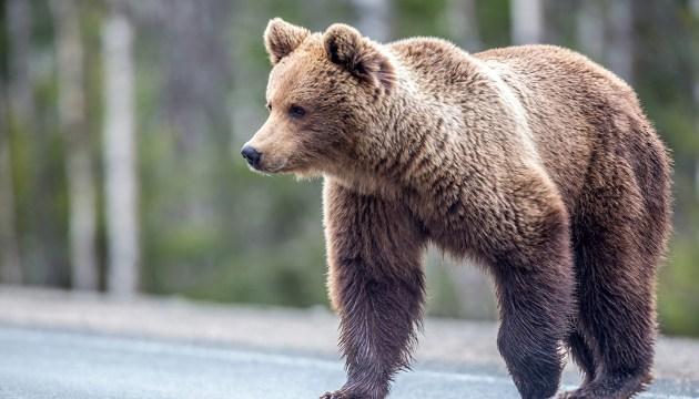 Встретил медведя? Прояви спокойствие