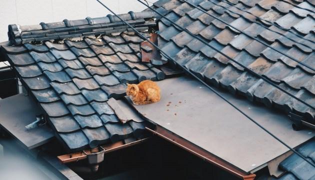 А с вашей крышей все в порядке?