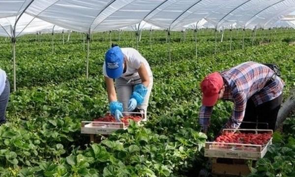 Пониженная налоговая ставка - прямая выгода для крестьян и их работников